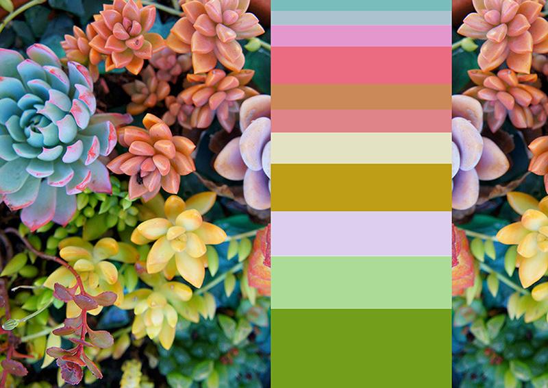 每个家都上演着不同的色彩故事