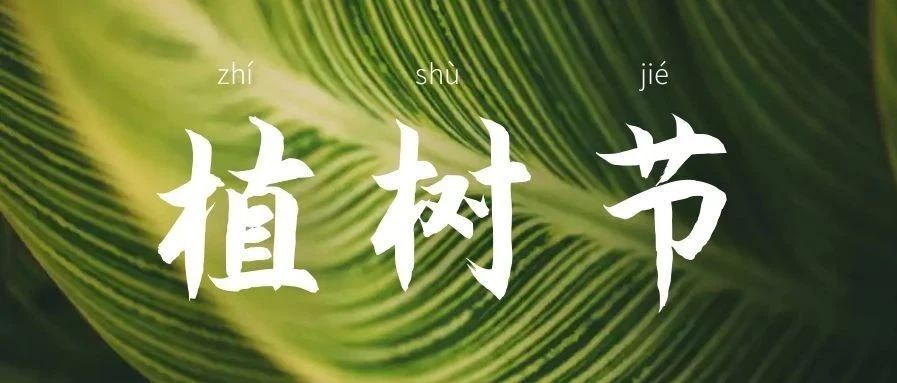 升华陶瓷 | 植树节:为春天,守护一抹碧绿~